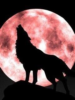 wolf moon peter owen w 246 lfe