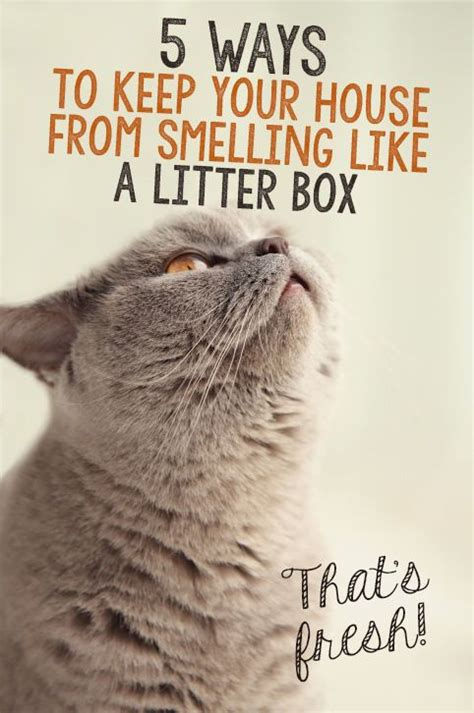 keep house from smelling like dog best 25 cat things ideas on pinterest cat love cat