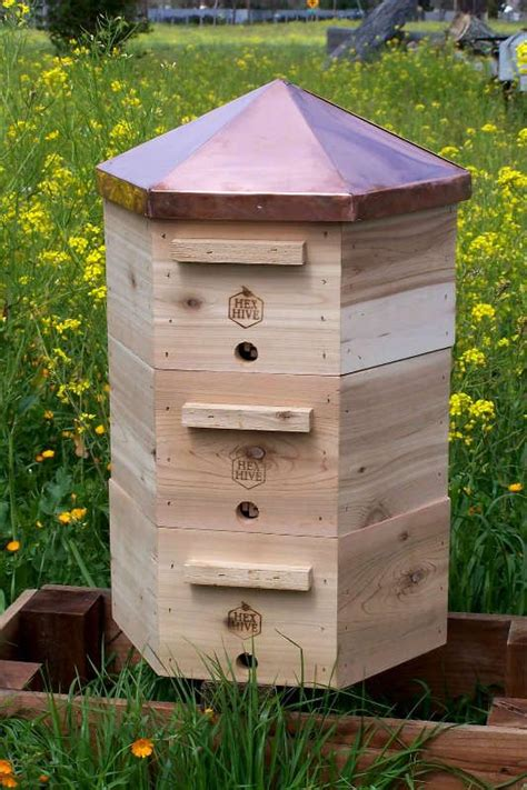 backyard beekeeping kit 14 best images about cool beehives on pinterest beach