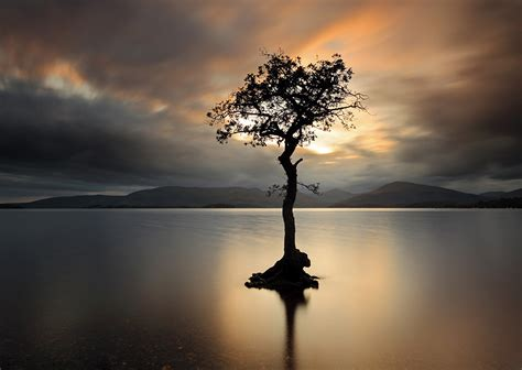 Lone L by Lone Tree Scottish Landscape And Wildlife Photography By Grant Glendinning