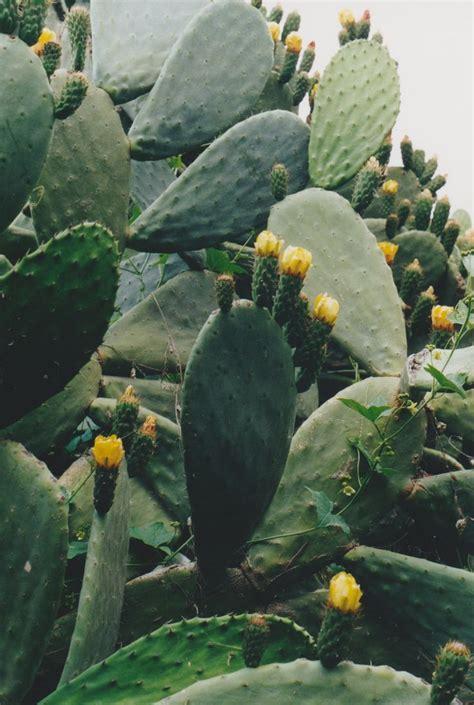 succulents in spain 14 best cactus succulent garden can pep masia images on succulents garden cactus