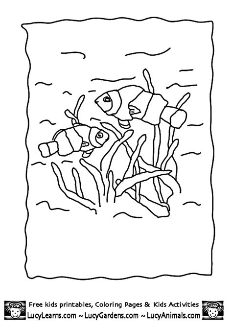 clown fish coloring page animal coloring pages of fish