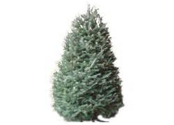 real fresh cut trees at the home depot at the