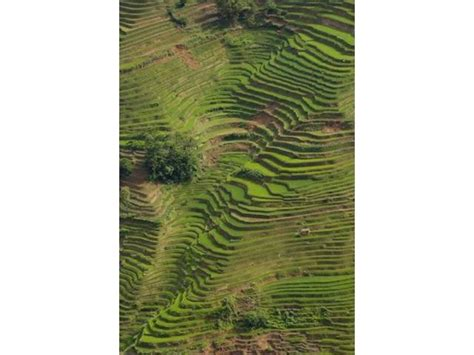 25 Home Decor by Rice Terraces Of The Ailao Mountains China Poster Print