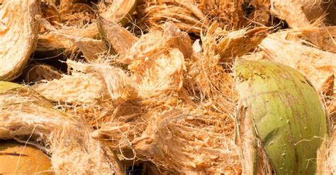 coco coir coconut coir what is coco coir and how to use it in the