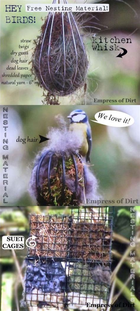 offer nesting materials for birds birds cat hair and nests