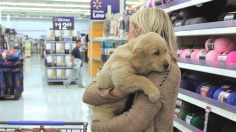 the puppy shop the puppy project puppy shopping on nationalpetday
