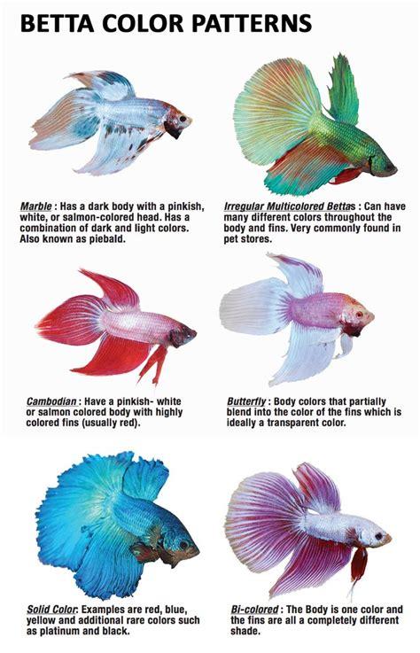 betta clipart color fish pencil and in color betta