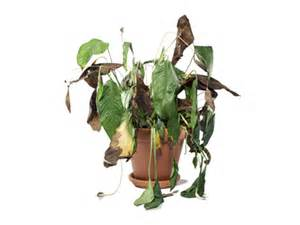 How To Save A Dying Plant by You Can Save It How To Fix 8 Things You Care About