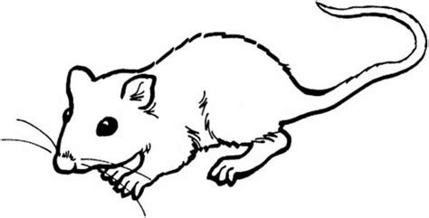 coloring page of templeton the rat templeton rat charlottes web sketch coloring page