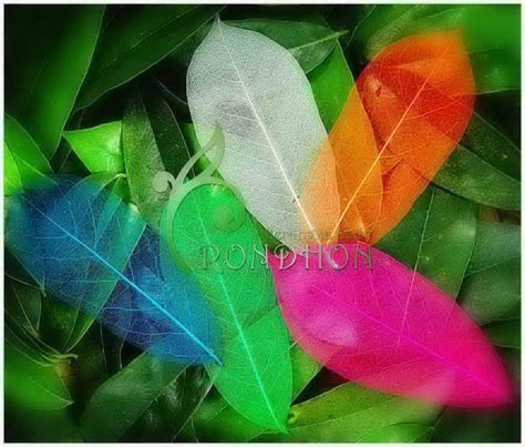 Bros Rajut Kupu Kupu Yellow Green souvenir daur ulang daun kering giva craft