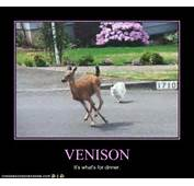 Pin Car Hitting Deer Meme On Pinterest