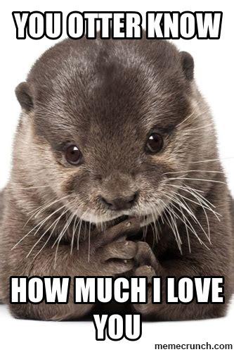Otter Love Meme - baby otters