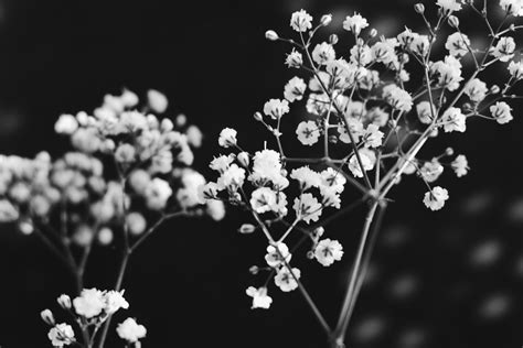 Black And White Pictures Free