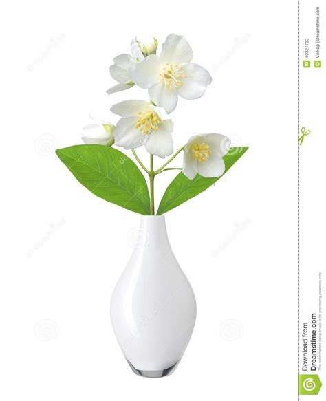 Flowers In White Vase by White Flower In Vase Isolated On White Stock