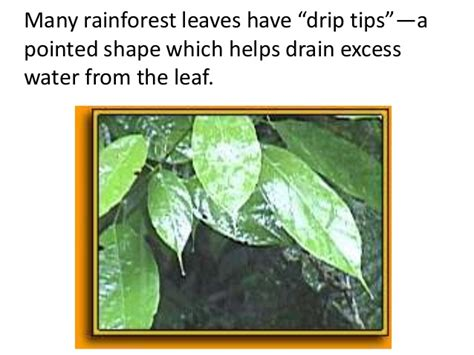 tropical forest plant adaptations image gallery jungle plants adaptations