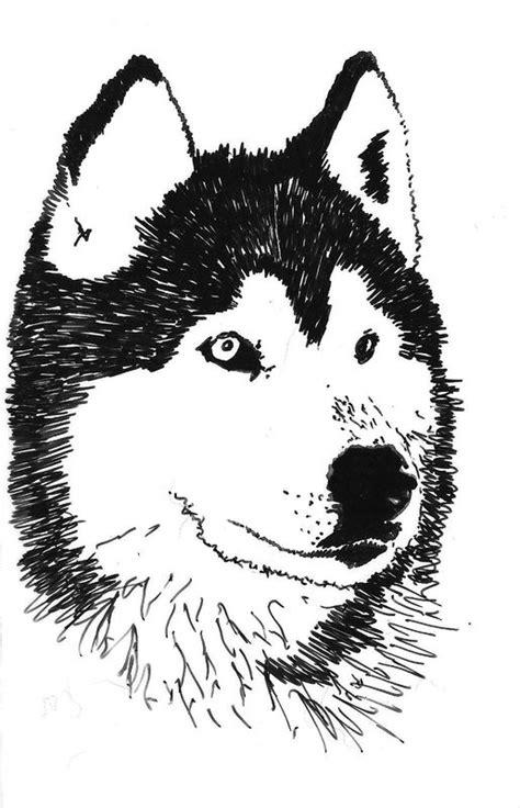 dessin - chien-traineau Ioda