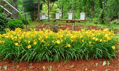jenis tanaman minimalis rekomendasi arsitek ibad garden