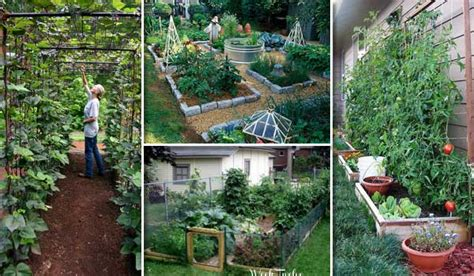 22 Ways For Growing A Successful Vegetable Garden Growing Your Own Vegetable Garden