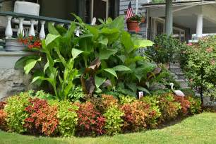 Landscaping Buffalo Ny by Gardeners Make Substitutes For Impatiens On Garden Walk