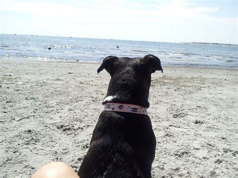 free puppies in south jersey any beaches that allow dogs in south jersey atlantic city city live in