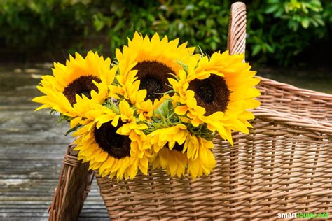 Garten Pflanzen Essbar by 8 Pflanzen F 252 R Den Garten Mit Essbaren Schmackhaften Bl 252 Ten