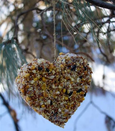 diy bird feeder pictures