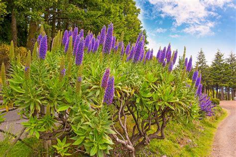 il giardino botanico il giardino botanico di funchal madeira portogallo