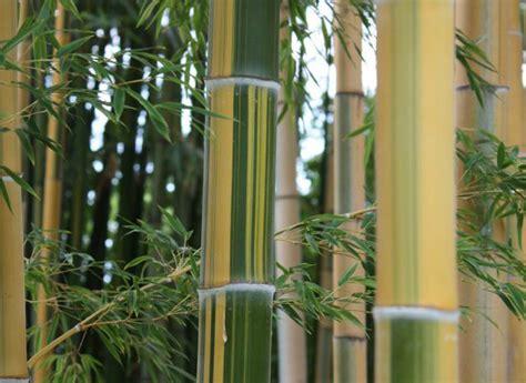coltivare il proprio giardino come coltivare i bamb 249 nel proprio giardino
