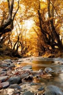 the golden forest exploring a coastal california ecosystem term ecological research books m 225 s de 25 ideas incre 237 bles sobre bosques en