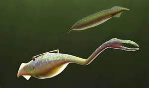 Image result for tully monster