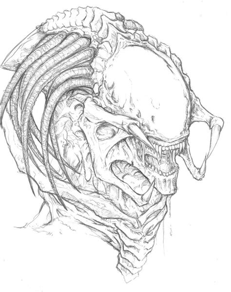 84 best images about PredAlien on Pinterest | Xenomorph