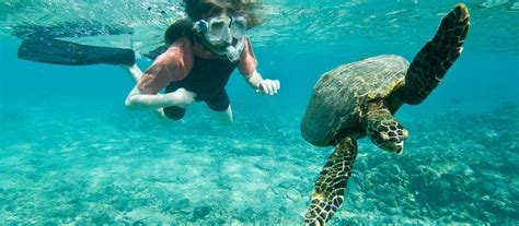 Snorkeling Destinations: 10 Best Places To Snorkel in the