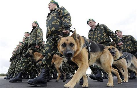 army dogs saved by dogs continental shepherds german