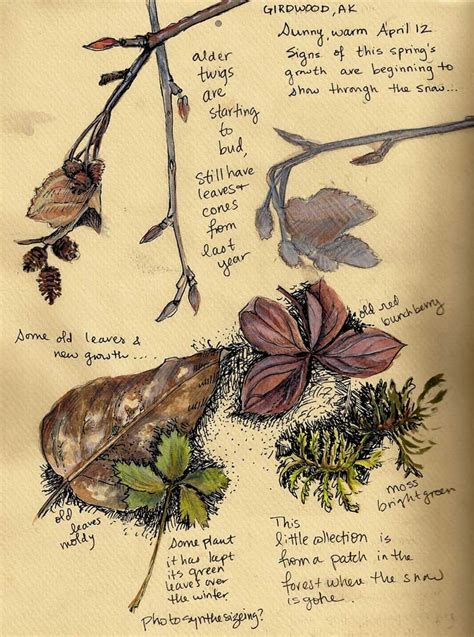 walk journal sketchbook or travel notebook books 17 best images about naturalist drawings on
