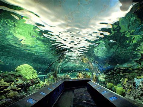 vasche aperte per acquari acquari nel mondo piccoli ma belli listooo