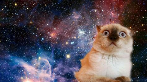 Cat In Space cat in the space hd wallpaper wallpaper studio 10 tens