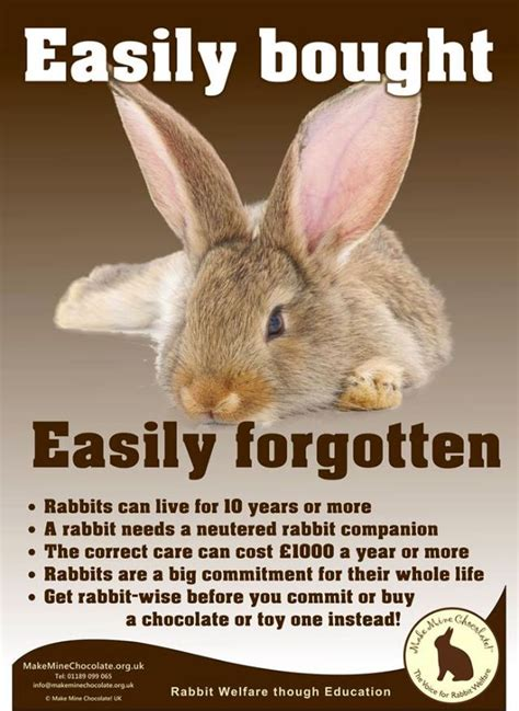 7 Facts On Bunny Rabbits by 49 Best Images About Facts Info On House