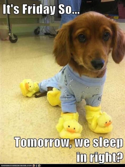 Dog Friday Meme - happy friday on the qt