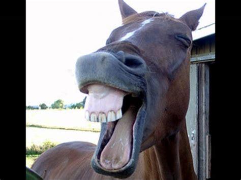 fotos animales riendose la oreja del caballo 3 wmv youtube