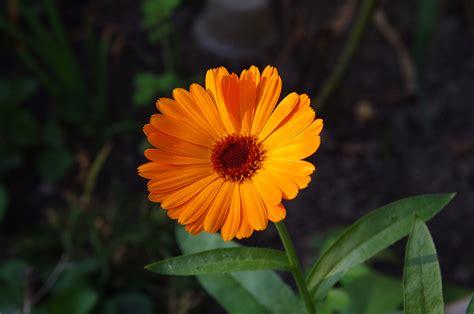 simple flower pentaxforumscom