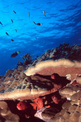dive vacations tips on scuba diving vacations usa today