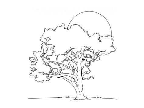 coloring page of buckeye tree ohio state buckeyes coloring pages coloring home