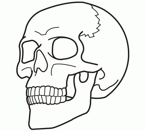 anatomy coloring book skull free printable skull coloring pages for 2014