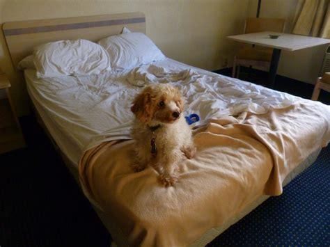 cani a letto il dorme nel letto soluzioni efficaci it