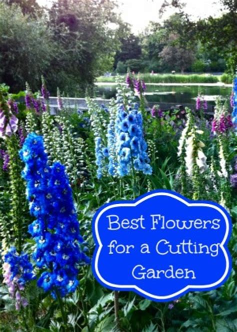 best flowers for garden grow the best flowers for a cutting garden need to