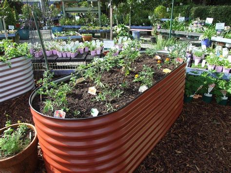 How To Build A Raised Vegetable Garden Bed Australia Australian Vegetable Gardening