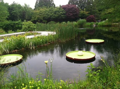 Lewis Ginter Botanical Garden Go Do This Nature Connects 174 With Lego Bricks 174 At