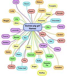 best 25 hamster names ideas on pinterest cute hamster