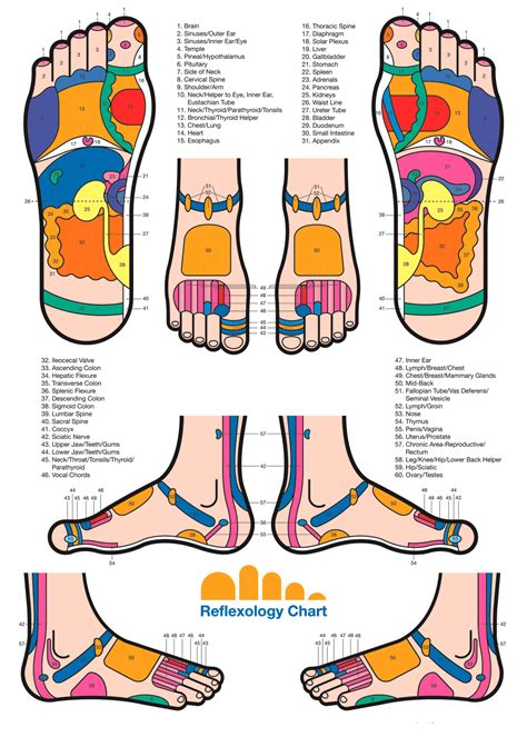 reflexology diagram backonpointe